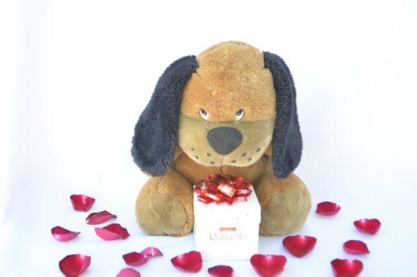 perro-chocolate